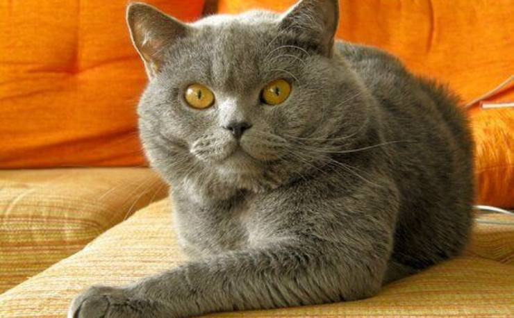 comportamenti del gatto durante la pubertà
