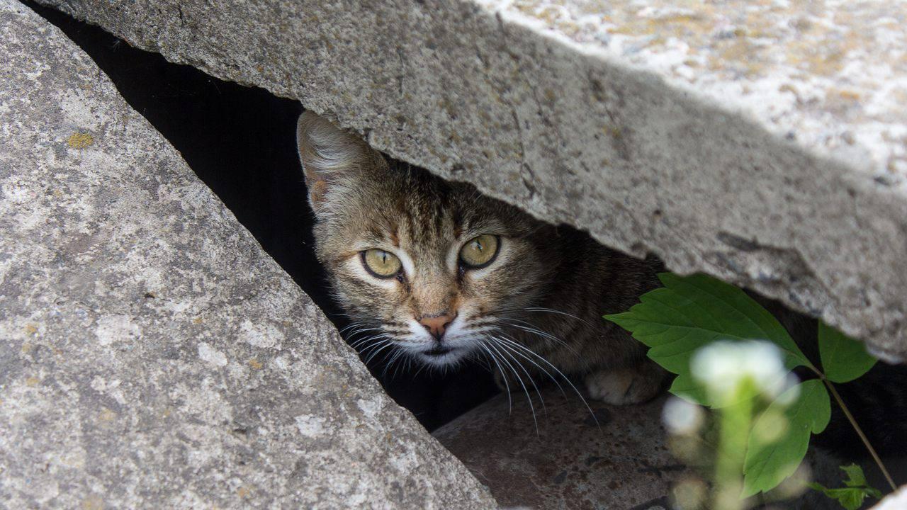 comportamento gatto smarrito
