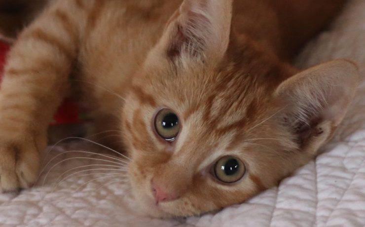 cos'è la sinusite nel gatto
