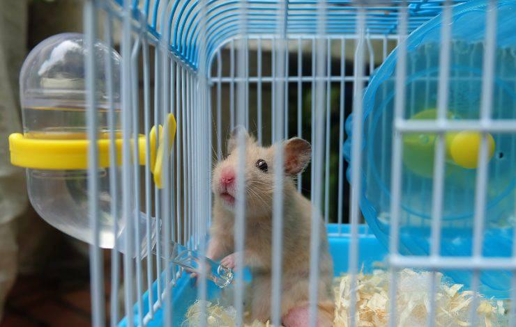 criceto in gabbia