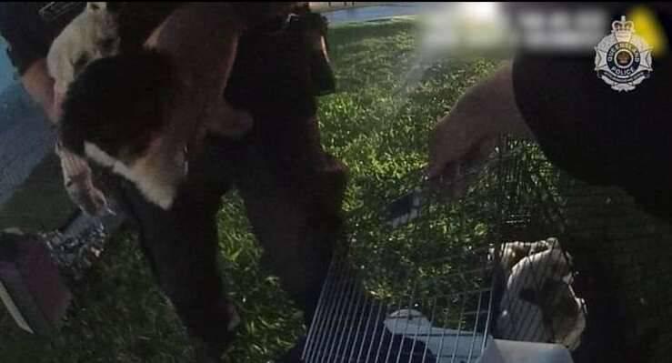 Cuccioli salvati dall'incendio
