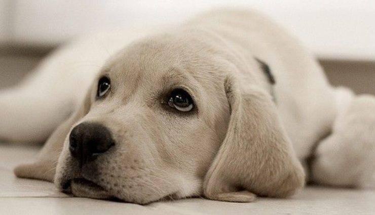cucciolo di cane malato