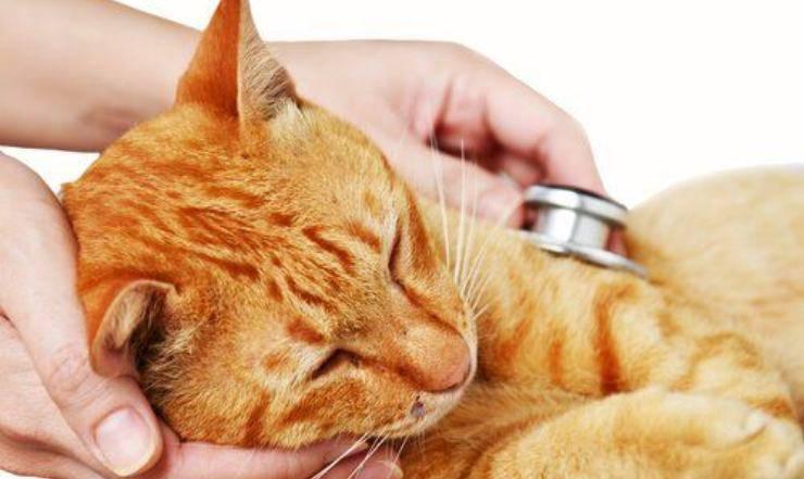 come curare la sinusite nel gatto