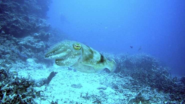 curiosità molluschi