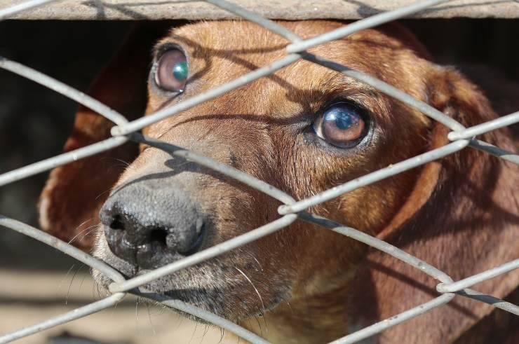 cane tra le sbarre (Foto Pixabay)