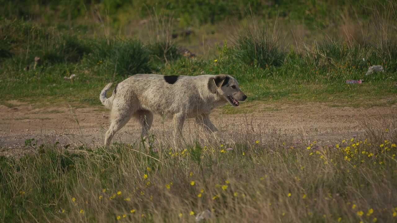 Differenze tra cane domestico e randagio: cosa cambia tra i due animali