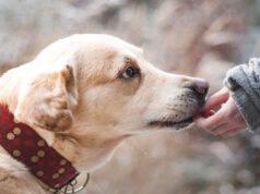 Cane incontra un militare (Foto Pixabay)