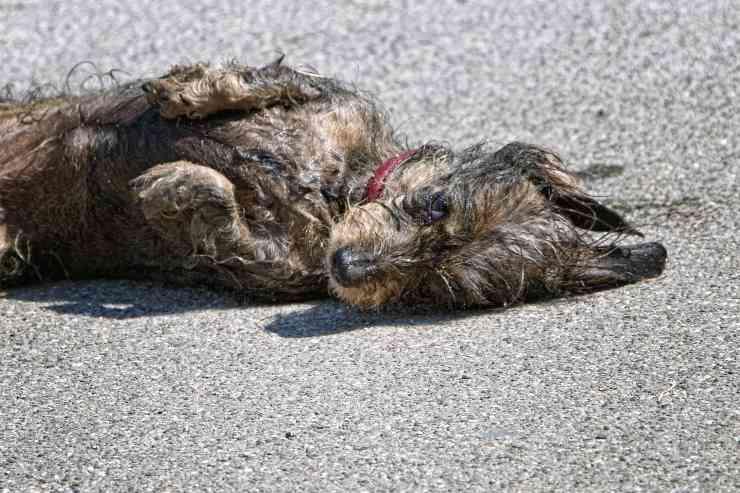 Cane rotola nella sporcizia