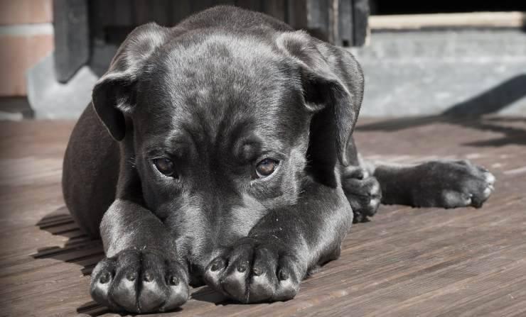 Cane bisognoso di aiuto (Foto Pixabay)