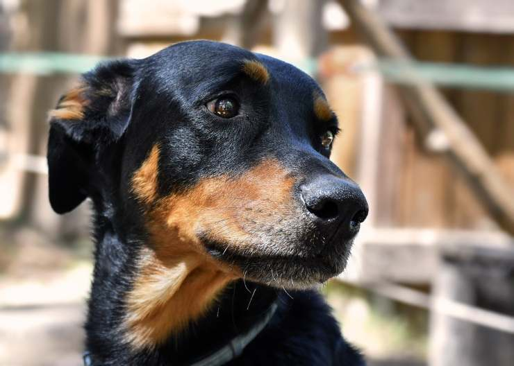 uomo nega proprietario cane abbandonarlo