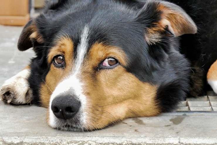 Cane triste (Foto Pixabay)