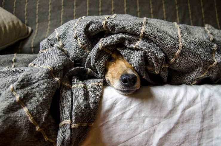 Il cane si nasconde in casa