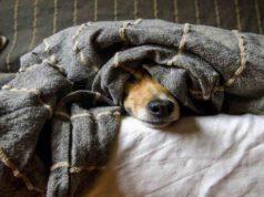 Il cane si nasconde