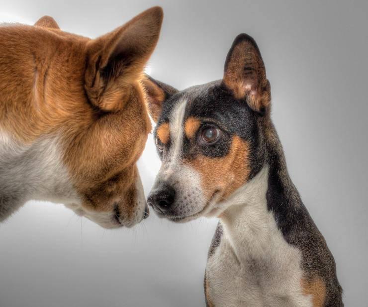 Cani a confronto
