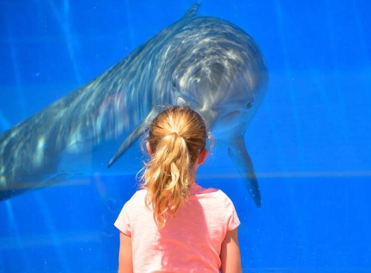 Animali preferiti dai bambini: il delfino