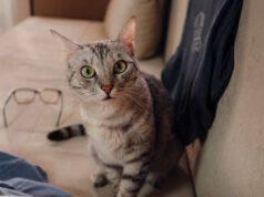 eliminare pipi gatto tessuti