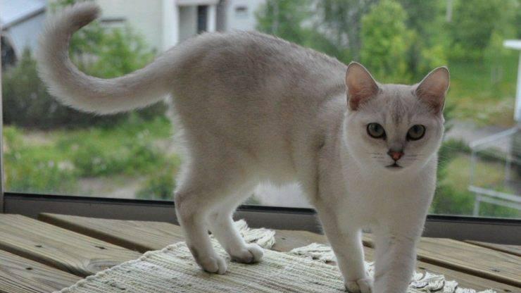 gatti attivi - Brumilla