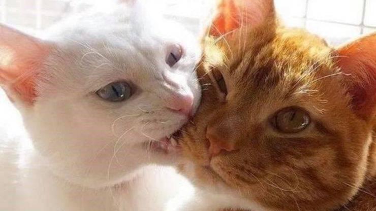 gatto morde guancia di un altro gatto