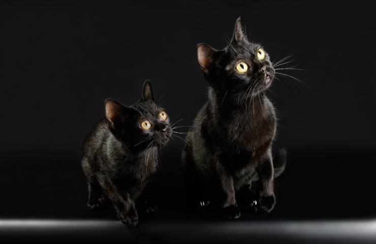 gatti bombay