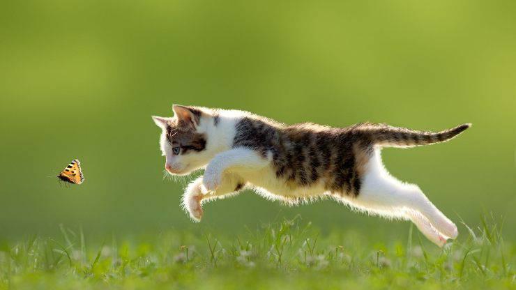 gatto che gioca all'aperto