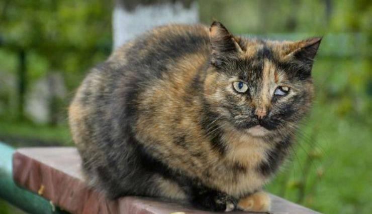 gatto con problema agli occhi