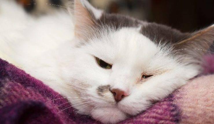 gatto con un occhio chiuso