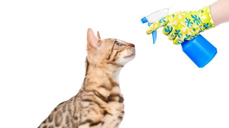 gatto e spruzzino