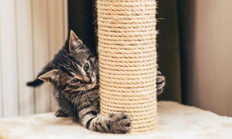 gatto graffia il tiragraffi