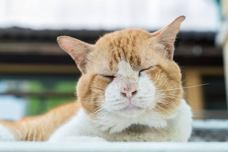 gatto malato e anziano