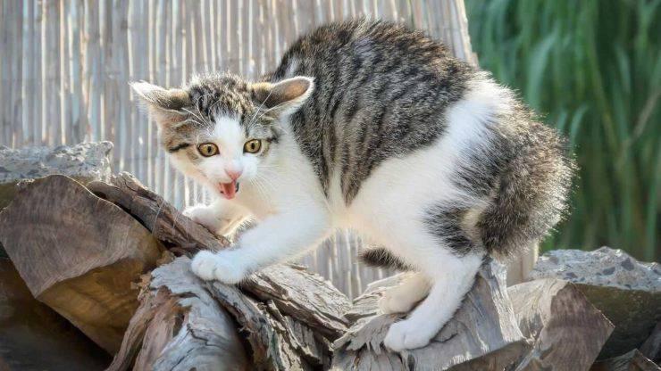 gatto paura stormi uccelli