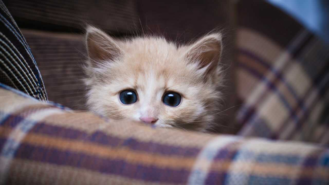 gatto paura vento