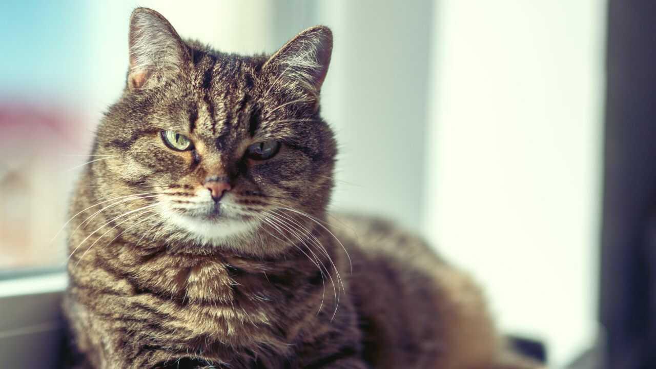 gatto più vecchio
