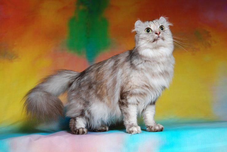 gatto 1