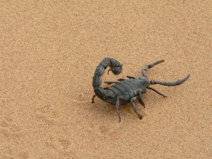 Animali che vivono sotto terra
