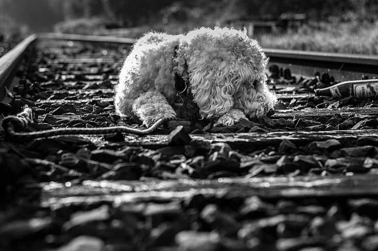 cane randagio salva senzatetto binari
