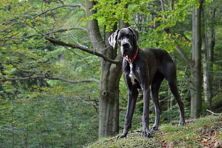 Cane con carattere sicuro
