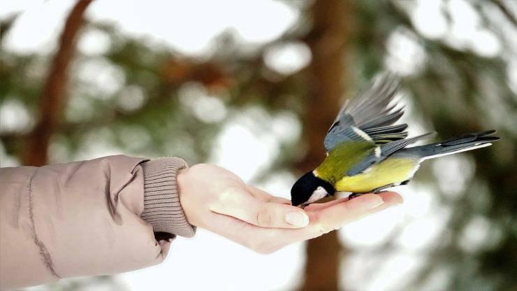 Cosa dare da mangiare agli uccellini