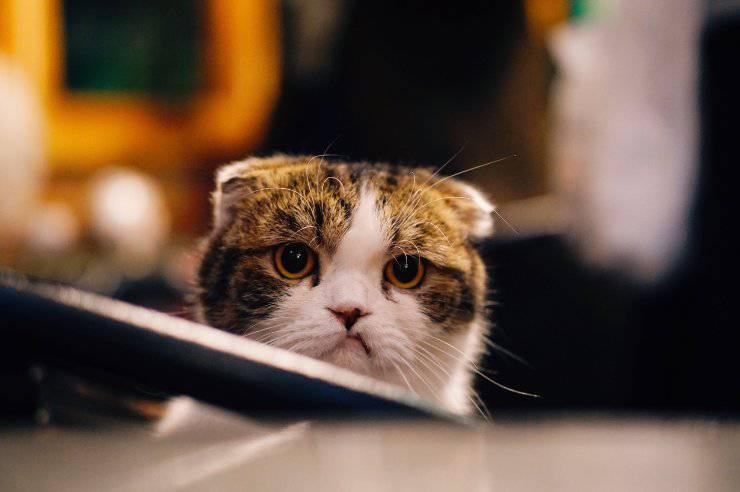 Il gatto e il suo disturbo