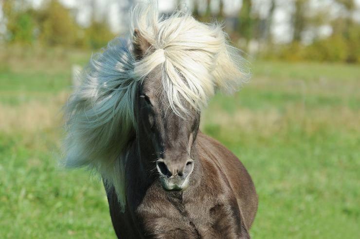 Come curare il manto del cavallo