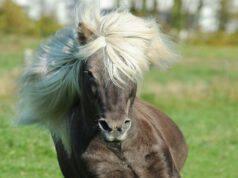 Il manto del cavallo