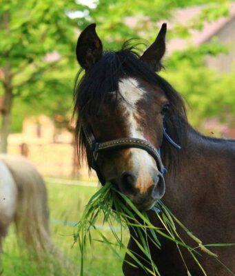 Cambiare la dieta del cavallo
