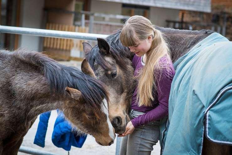 Animali preferiti dai bambini: pony