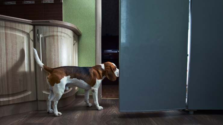 i cani rubano al buio