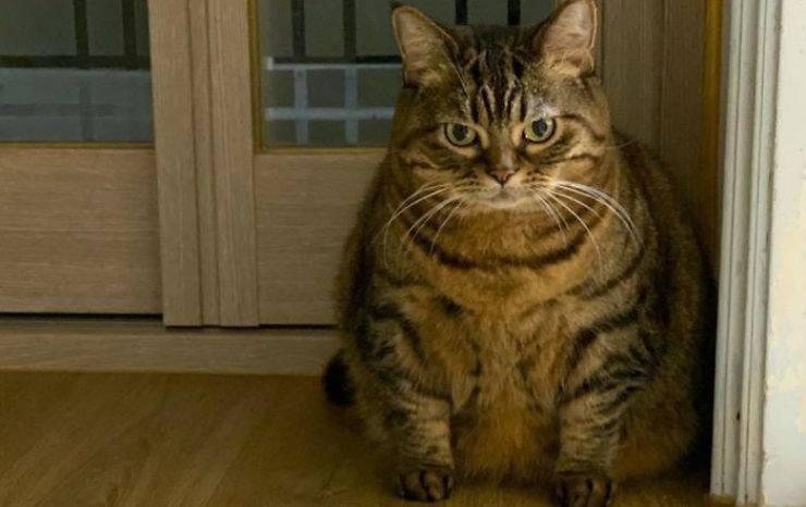 il gatto Manggo
