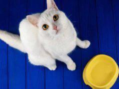il gatto non evita nemici suo umano