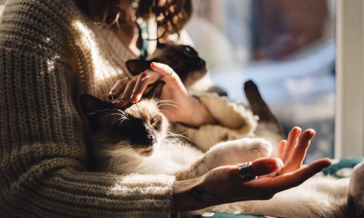 il gatto riduce lo stress perché