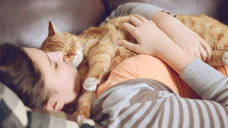 il gatto riduce lo stress