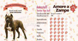 infografica cane AMASTAFF new