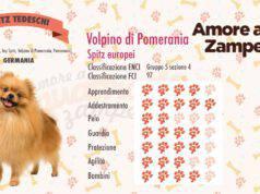 infografica cane Volpino di Pomerania new
