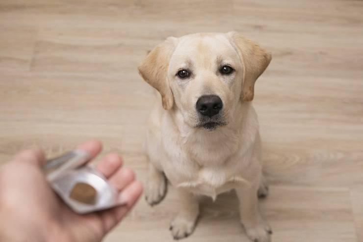 integratori naturale per il cane